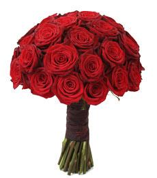 red-rose-standing.jpg