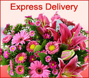 Express Delivery To Worms